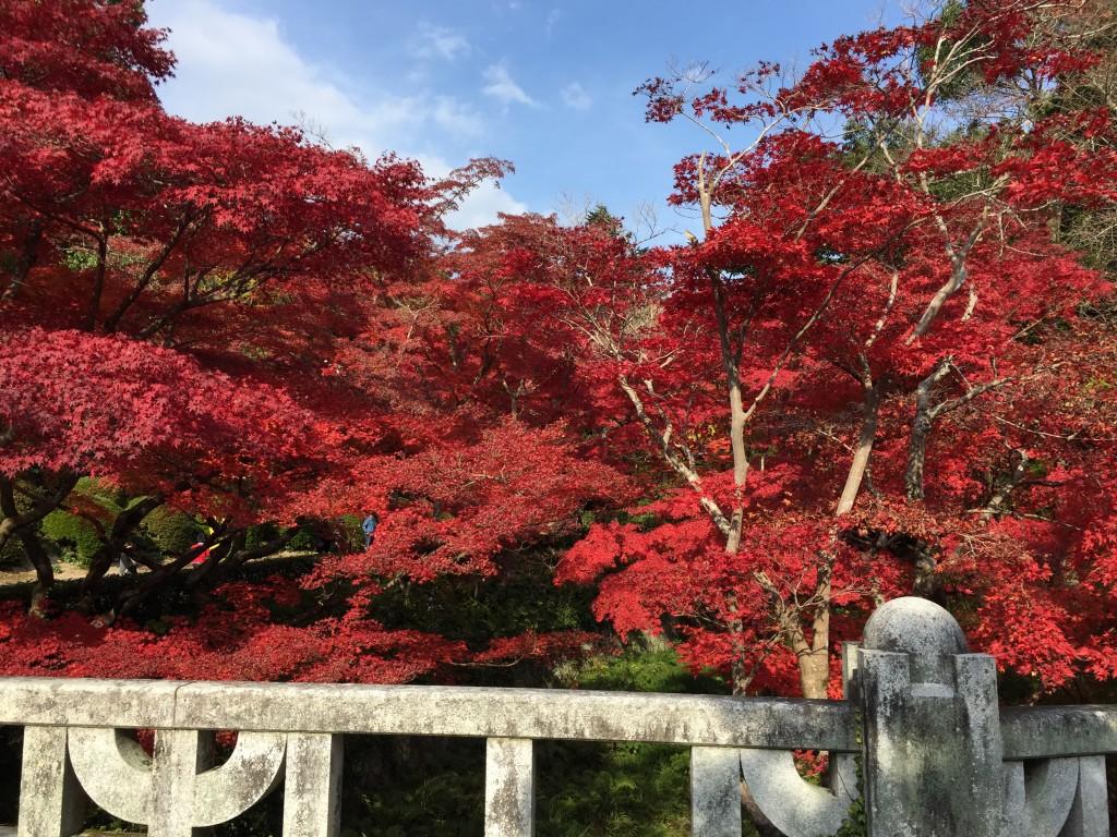 見渡す限り紅葉しています。