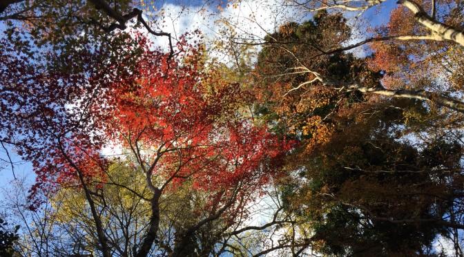 龍蔵寺のイチョウの木