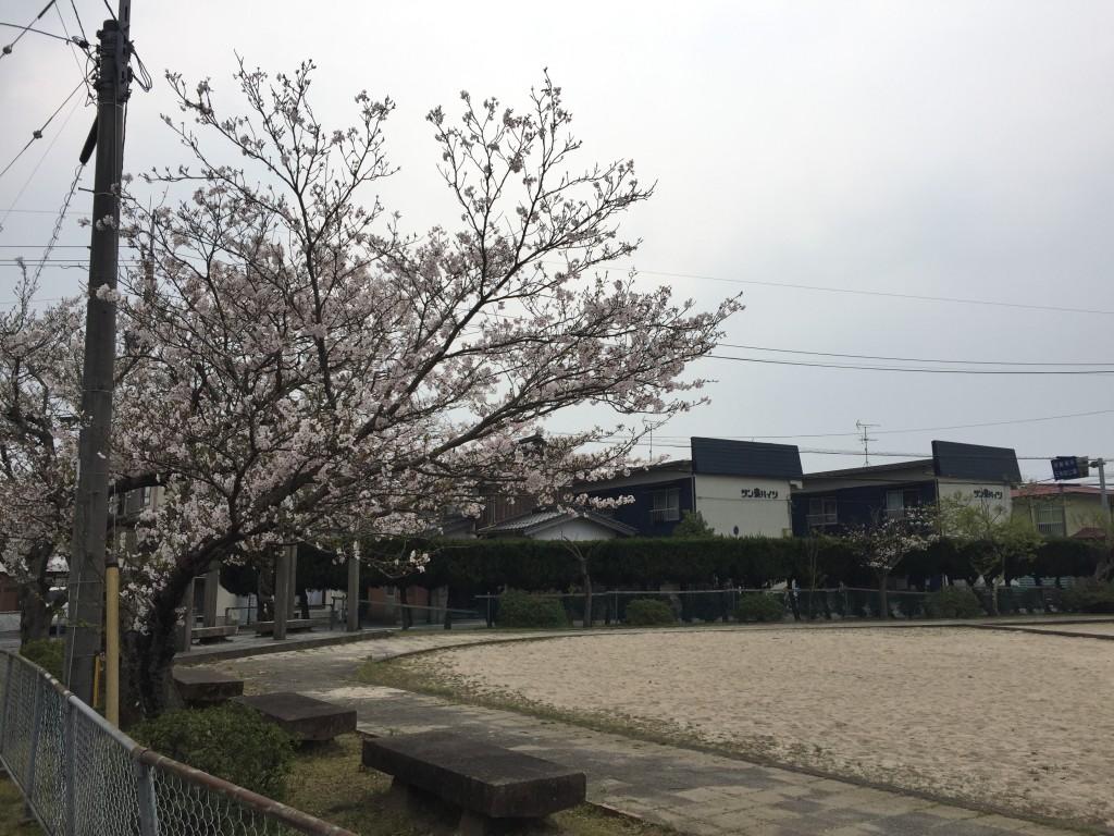桜の季節には花見もできる。