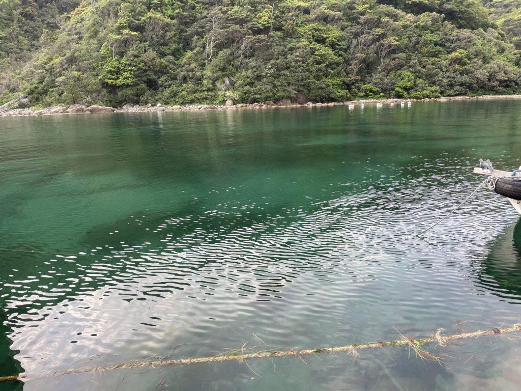 軽尾海岸の特徴はとにかく海が綺麗だ。透明度がすごく高い。